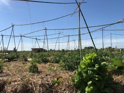 les plantations de tomates du Biopôle de Léa Nature près de La Rochelle